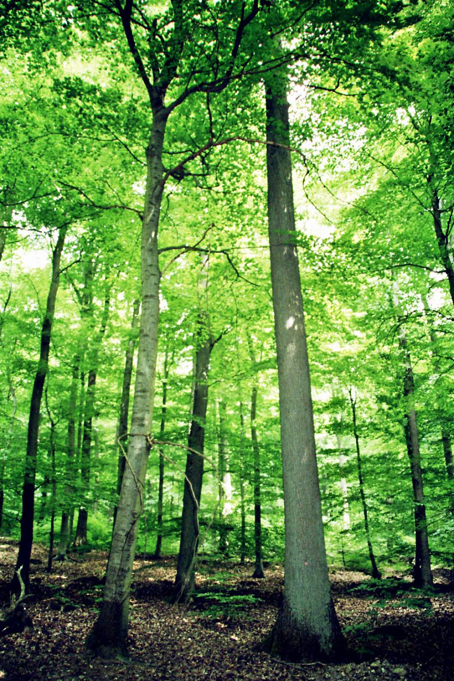 Pflanze einen Baum für dein Blog!