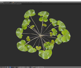 3D Pflanzen modellieren