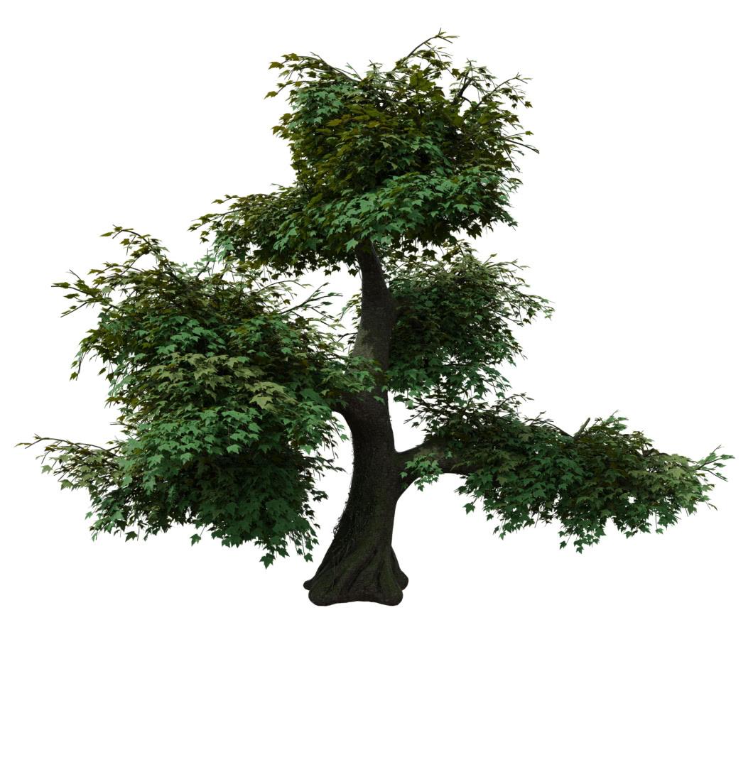 Efeu klettert einen Baum hoch