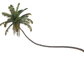 Blender: 3D-Modell Kokospalme