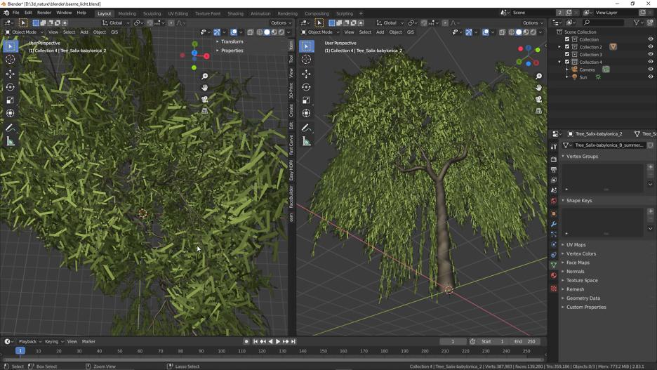 Echte Trauerweide: Baum 3