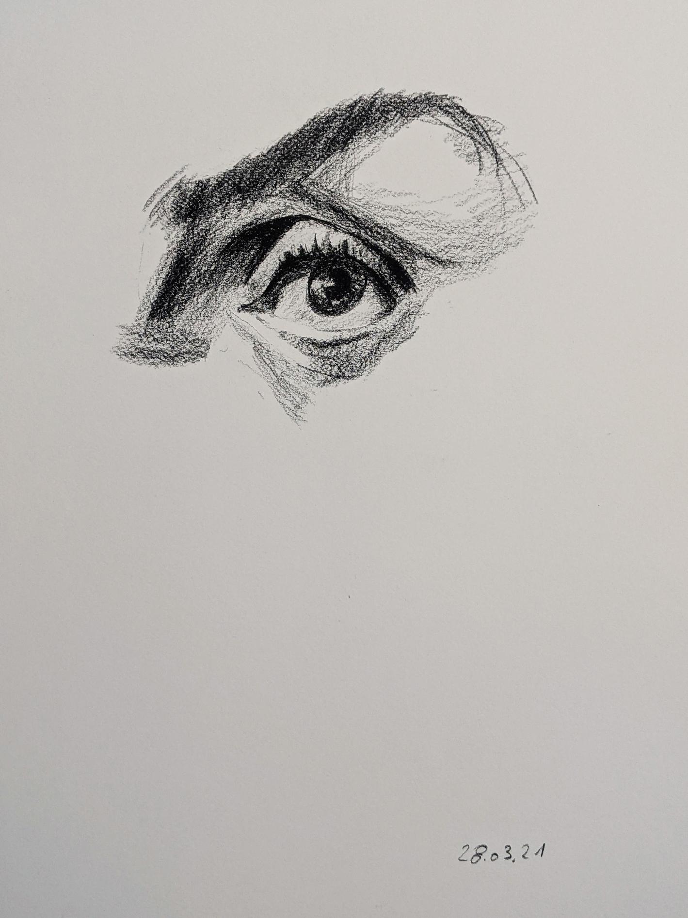 Merkmale des Kopfes, das Auge