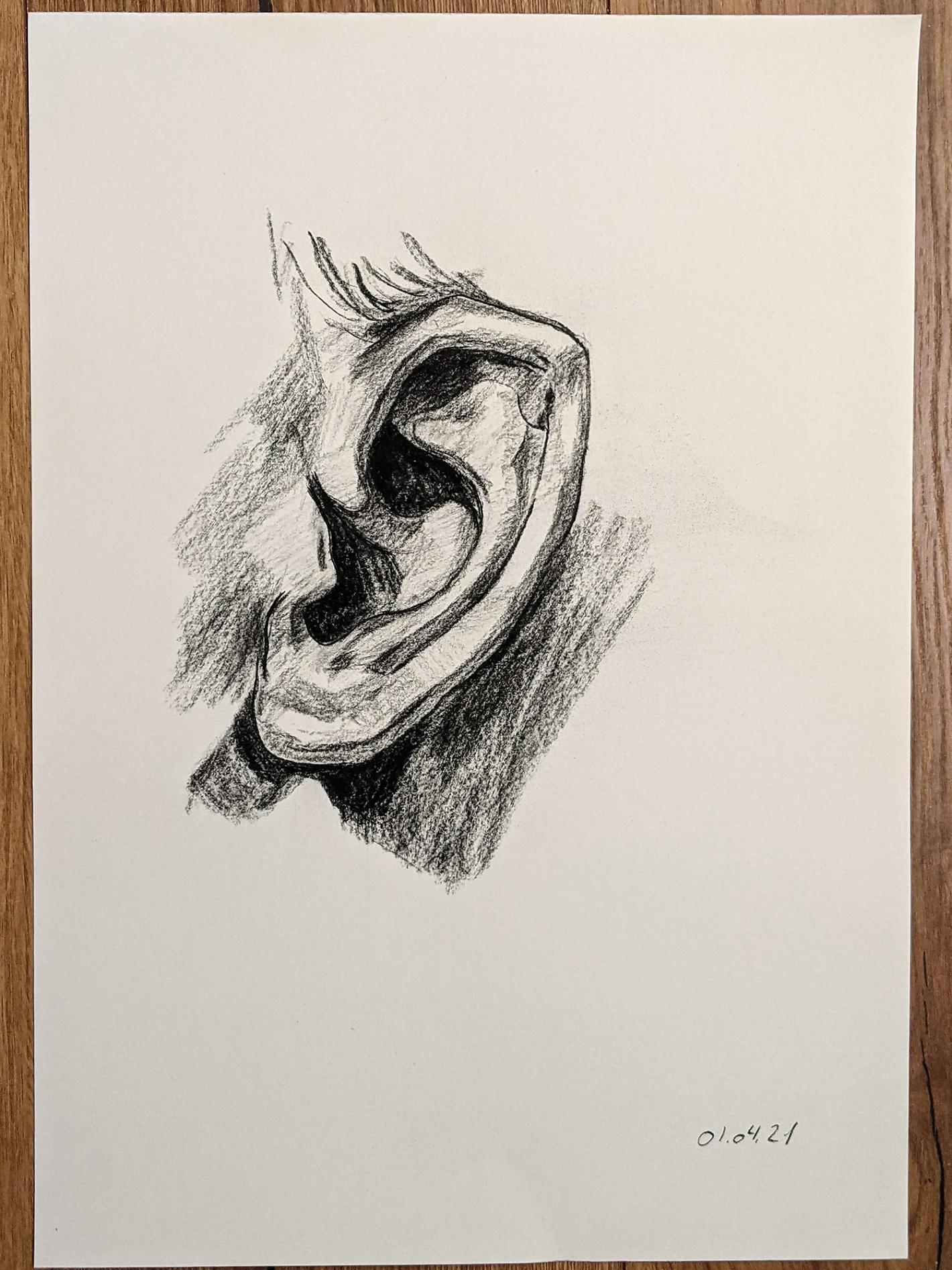 Zeichnung vom Ohr